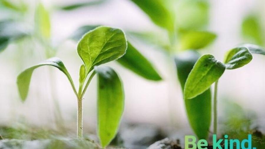 programa Be Kind de Globant para reducir emisiones de carbono